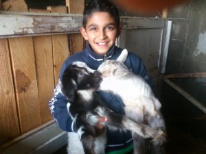 Boy with baby goats